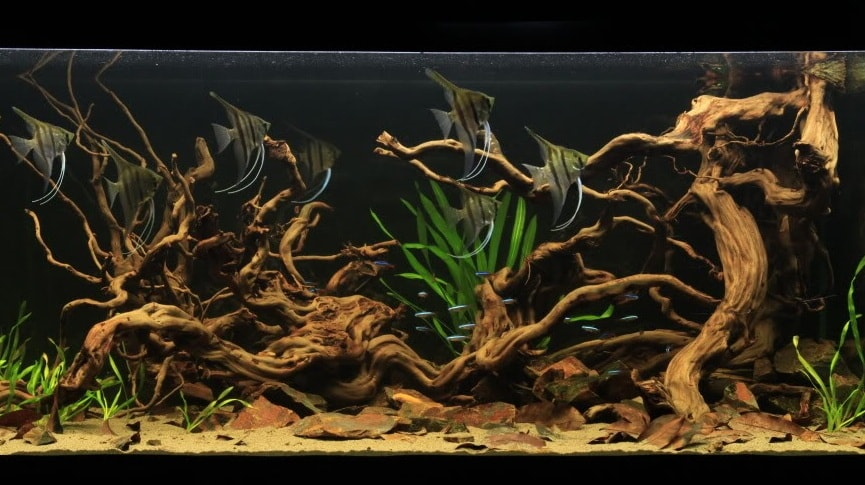 driftwood-hocanamhaiduong.vn_ Gỗ lũa- một tuyệt tác vô giá của thiên nhiên