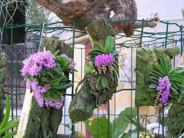 trồng-lan-trên-gỗ-lũa-6 Gỗ lũa- một tuyệt tác vô giá của thiên nhiên